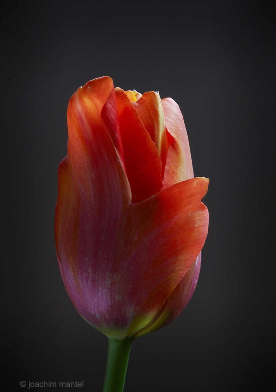 mantel-fotografie-fotospur-corona-20200404