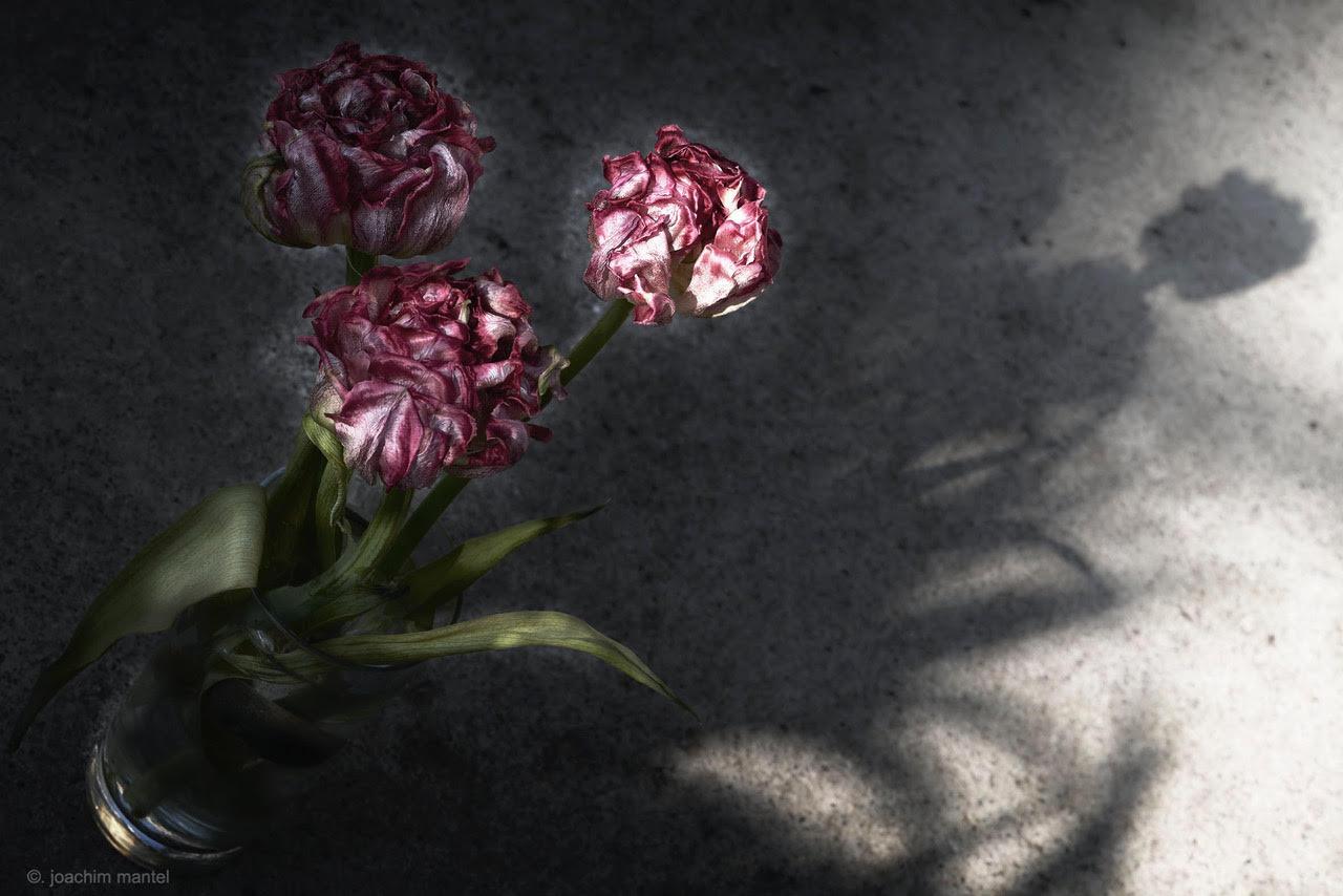 mantel-fotografie-fotospur-corona-20200410